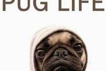 Pugs, pugs and more pugs :)