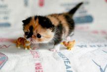 Little Cuties / by Brooke DeJohn