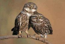 Gotta love these little owls