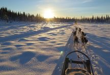 Dog Sledding - Active Lapland / Resor