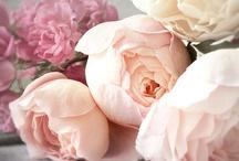 fleur. / daisies, peonies, gardenias and tulips, oh my!