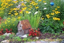 Gardening/Landscaping / by Jeanette Bruce
