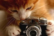 Animal Photography / by Jeanette Bruce