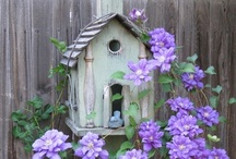 Birdhouses & Birdcages / by Jeanette Bruce