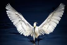 Wings / by Angela Vamos