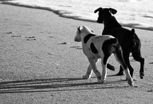 Dogs: favorite photos / by Jeanette Bruce