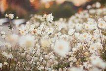 flower shop / by Taylor Bogle