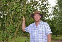 On The Macadamia Farm