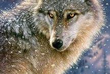 ♥ Lupi ♥ / #wolf #lupo