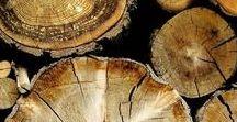 wood piles / For David