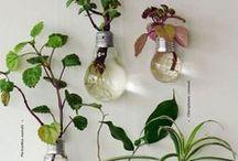 Plants ✿✿ Plantinhas