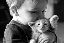 Cats / by JK. K