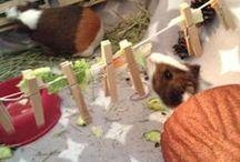 DIY Guinea Pig Stuff