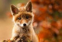 ANIMALS  beautiful