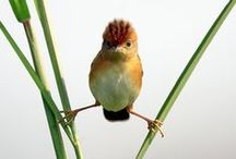 BIRDS beautiful