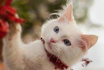 CATS beautiful