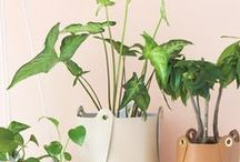 Plant love / Find endless varieties of plants and how to style &  take care them