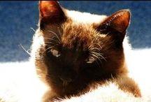 Moje koty / O moich kotach i żółwiu oraz cudzych przeze mnie foconych.
