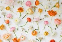 Jolies fleurs // Flowers / Des fleurs pour adoucir le monde