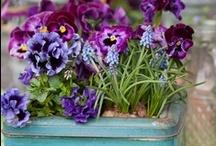 Beautiful Flowers, Herbs