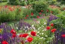 Gorgeous Gardens / As a passionate landscape designer, horticulturist & gardener, I simply love to see & enjoy a beautiful garden. This collection of images are for times when I'm looking for inspiration! #gorgeusgardens