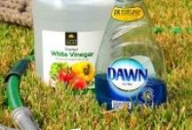 DIY Natural Cleaning Products / A collection of natural DIY cleaning products to make for use around the home. #diynaturalcleaningproducts