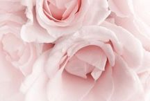 A rose is a rose... / Absolutely love roses