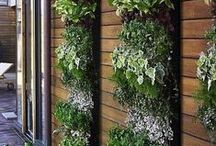 Vertical Garden & Greenwalls / Creative and Inspiring Ideas for incorporating vertical gardens and greenwalls into outdoor spaces. We'll never run out of ideas again. #verticalgardens / by Sue Bampton