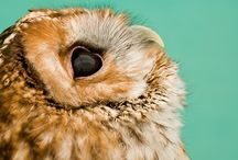 OWLS / by HANNIA