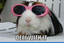Piggies:))