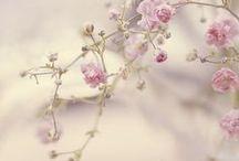 ⊹⊱ Spring ⊰⊹ / Vieni, usciamo. Tempo è di rifiorire. ~ G.D'Annunzio.~
