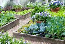 vegetable gardening / by Anna