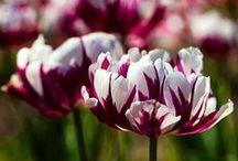 Spring flowers / When Spring arrives