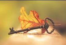 ⊹⊱ Autumn ⊰⊹