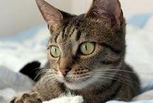 flea-free & worm-free cat / by Anna
