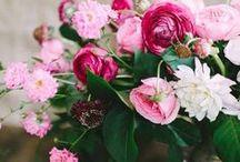 ⊹⊱ Pink ⊰⊹