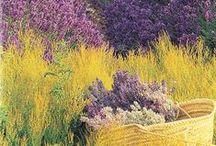 ⊱ Violet Lilac Prune ⊰