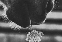 ⊹⊱ Animals ⊰⊹