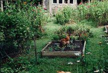 Landscaping/garden