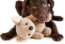 Honden spulletjes
