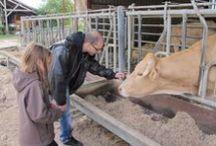 La vie à la ferme en Seine-et-Marne