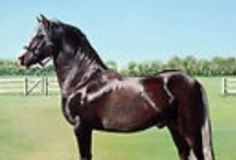 My Acrylic Horses / Horses I have painted in acrylic