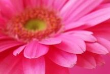 Colour Inspirations - Pink