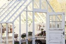 greenhouse/glasshouse love