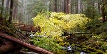 Beautiful trails / I love hiking!!!