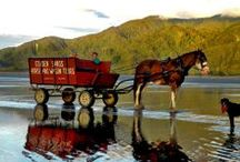 Horse and Wagon Tours NZ / Welcome to Golden Sands Horse & Wagon Tours, on the Barrytown beach ~ West Coast of the South Island, New Zealand. Travel down one of New Zealand's most beautiful, unspoiled wild West Coast beaches, at a tranquil pace in the hoofprints of the early pioneers.  Go to wagontours.co.nz or contact us at  horsewagontours@gmail.com