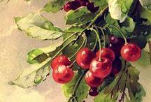 Papier do transferów - owoce i warzywa
