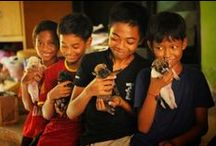 About BAWA / BAWA directly relieve the suffering of animals by providing emergency response and rescue, medication, rehabilitation and adoption. We practice humane population control and have intensive education and advocacy programs for sustainable improvement to animal welfare.