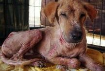 Animal Rescue Stories / BAWA saves lives every day. Take a look at animal rescue stories that will make you shiver.