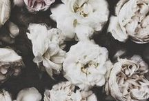 Floral Inspiration / Ideas/Inspirations for florist site